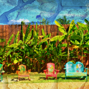 Growing plantains near fence