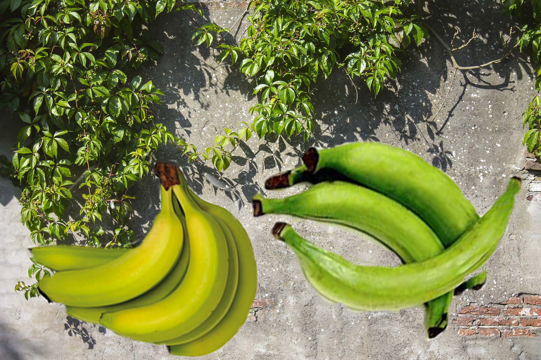 featured plantain