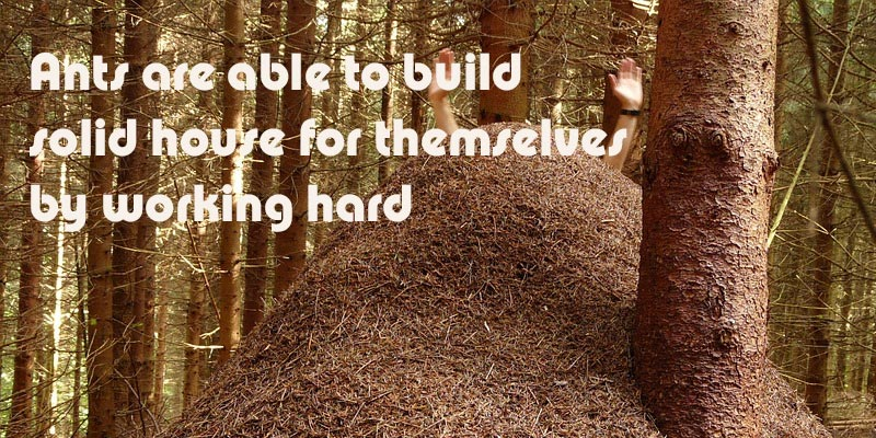 By hardwork ants build solid house