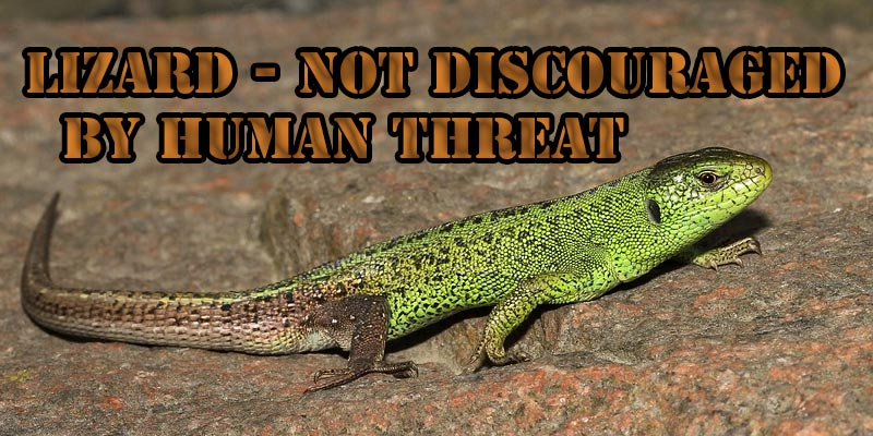 Lizards gain access to everywhere.